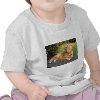 Gato de Oliverio Camiseta