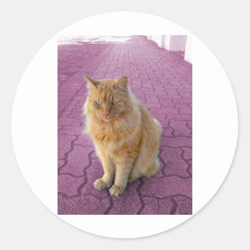 Gato de oro pegatina redonda