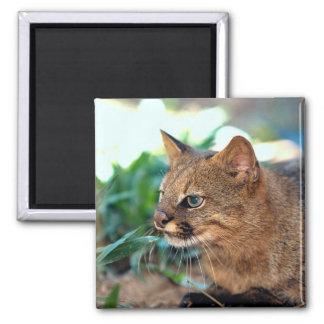 Gato de Pampa (colocolo del Felis) Imán De Frigorífico