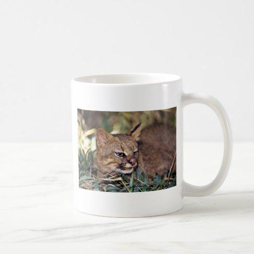 Gato de Pampa (colocolo del Felis) Taza