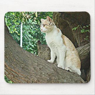 Gato de Parque Kennedy Mouse Pad