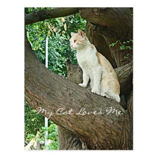 Gato de Parque Kennedy Postcard