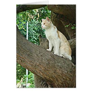 Gato de Parque Kennedy Tarjeta De Felicitación