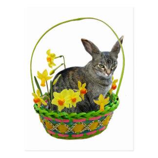 Gato de Pascua en postal de los narcisos