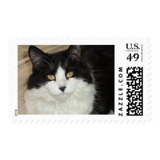 Gato de pelo largo blanco y negro timbres postales