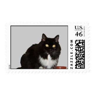 Gato de pelo largo del mascota