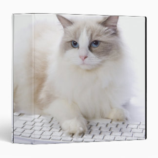 Gato de Ragdoll en el teclado de ordenador