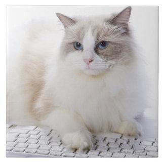 Gato de Ragdoll en el teclado de ordenador Azulejo Cuadrado Grande