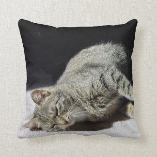 Gato de relajación almohadas