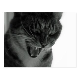 Gato de risa