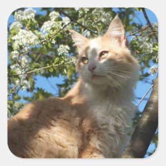 Gato de Sáhara en pegatinas de un árbol Pegatina Cuadrada