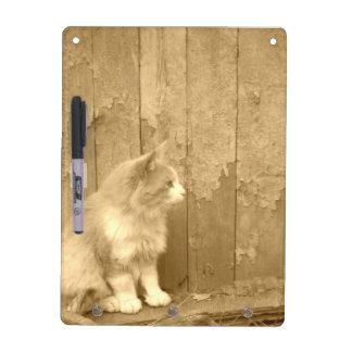 Gato de Sáhara en tablero seco del borrado de la s Pizarra
