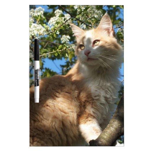 Gato de Sáhara en un tablero seco del borrado del  Pizarras Blancas De Calidad