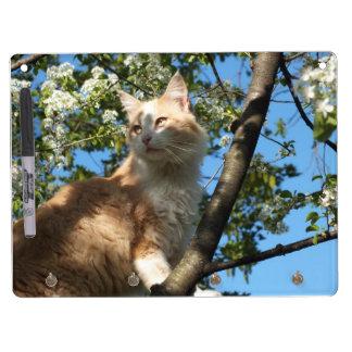 Gato de Sáhara en un tablero seco del borrado del  Pizarras