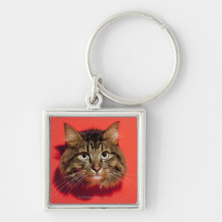 Gato de Saiberian Llaveros Personalizados