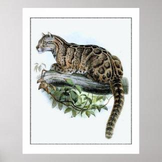 Gato de selva extinto del leopardo de Formosa Impresiones