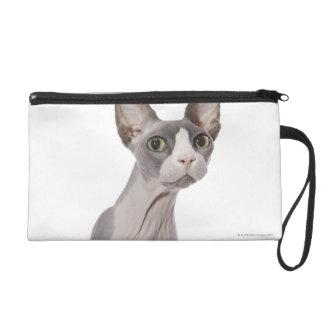Gato de Sphynx con la expresión sorprendida