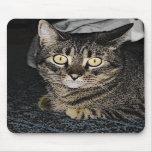 Gato de Tabby Alfombrilla De Raton