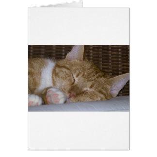 Gato de tabby amarillo tarjeta