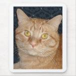 Gato de Tabby anaranjado Alfombrillas De Ratón