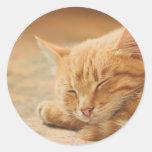 Gato de Tabby anaranjado el dormir Etiqueta Redonda