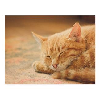 Gato de Tabby anaranjado el dormir Tarjeta Postal