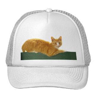 Gato de Tabby anaranjado en la cerca verde Gorro