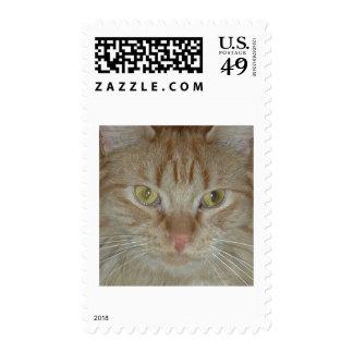 Gato de Tabby anaranjado Envio