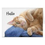 Gato de tabby anaranjado felicitación
