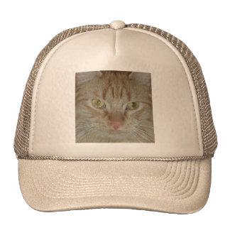 Gato de Tabby anaranjado Gorros Bordados