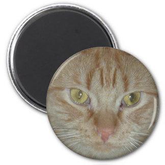 Gato de Tabby anaranjado Imanes