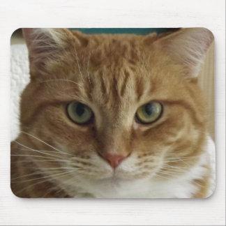Gato de Tabby anaranjado Mousepad Tapetes De Raton