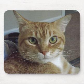 Gato de Tabby anaranjado Mousepad Tapete De Ratón