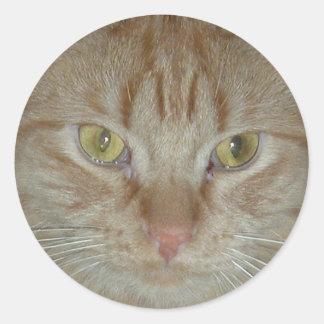 Gato de Tabby anaranjado Pegatinas Redondas