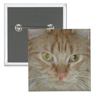 Gato de Tabby anaranjado Pins