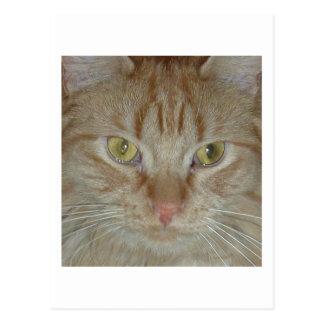 Gato de Tabby anaranjado Postal