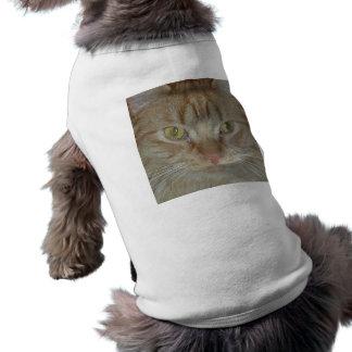 Gato de Tabby anaranjado Ropa Macota