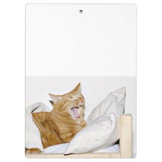 Gato de tabby anaranjado soñoliento