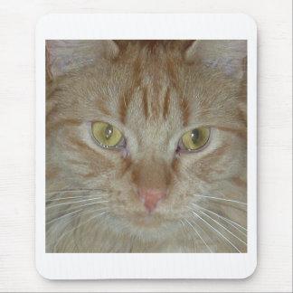 Gato de Tabby anaranjado Tapetes De Raton