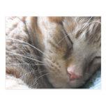 Gato de Tabby anaranjado Tarjetas Postales