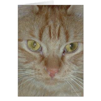 Gato de Tabby anaranjado Tarjetón