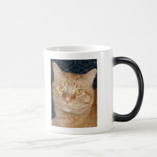 Gato de Tabby anaranjado Taza Mágica