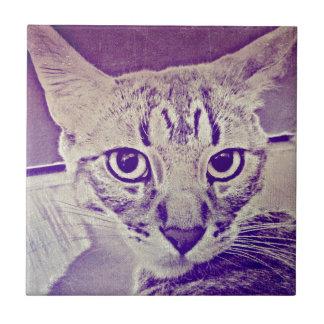 Gato de Tabby Azulejo Ceramica