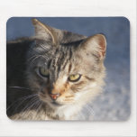 Gato de tabby bonito con los ojos del oro alfombrilla de ratones