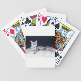 Gato de tabby británico de la plata del pelo corto baraja de cartas