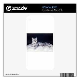 Gato de tabby británico de la plata del pelo corto calcomanía para iPhone 4