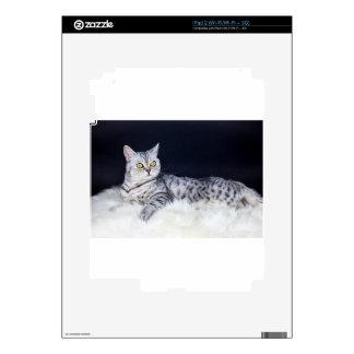 Gato de tabby británico de la plata del pelo corto skins para iPad 2