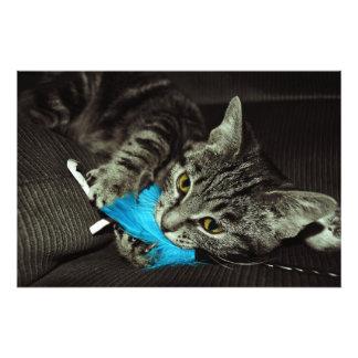 Gato de Tabby con la pluma de Shirley Taylor Fotografías