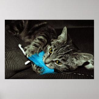Gato de Tabby con la pluma Poster
