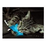 Gato de Tabby con la pluma Postales